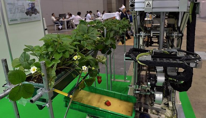 Робот-сборщик клубники представлен на выставке в Японии.