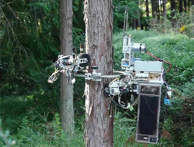 Никакое дерево не в безопасности, когда в дело вступает роботизированная цепная пила
