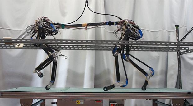 Четвероногий робот делает первые шаги