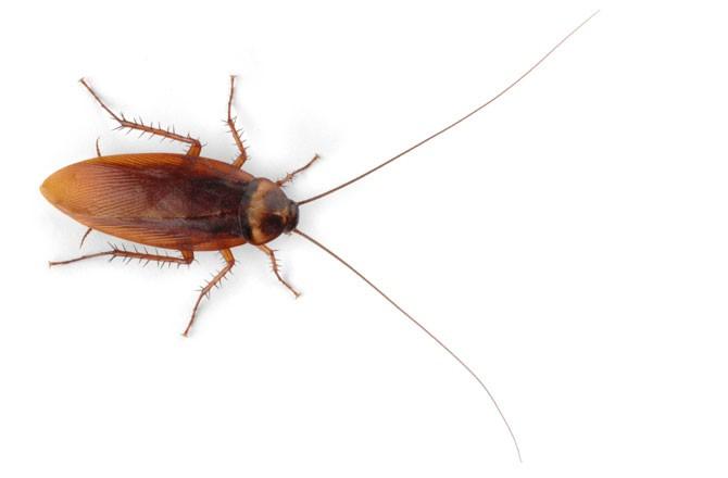 Инъецированные нанороботами тараканы