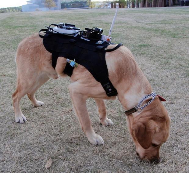 В команде быстрого реагирования – роботы, беспилотные аппараты и собаки