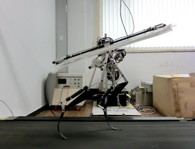 Движения велоцераптора в основе бегущего робота