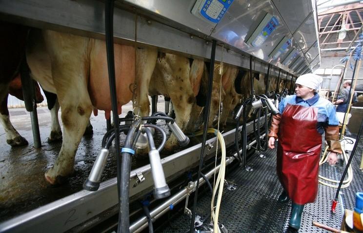 Автоматизированные фермы в Свердловской области