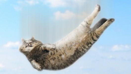 Исследователи обращаются к кошкам, чтобы сделать посадки роботов «мягкими»