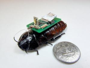 Тараканы киборги для работы в зонах бедствия