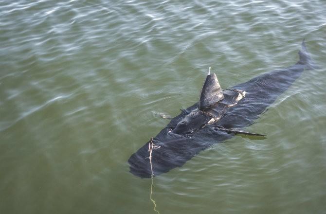 Военно-морской флот начинает использовать роботов-акул. Без шуток!