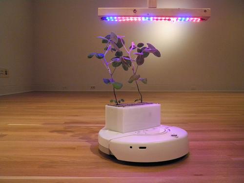 Ученые создали Soybots — мобильный сад в миниатюре
