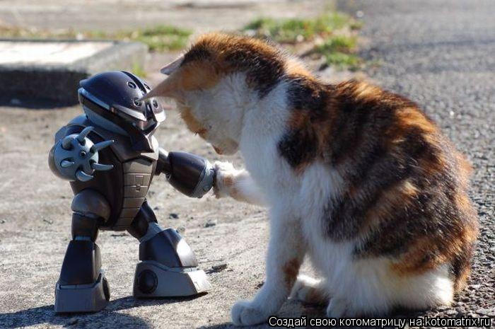 Робот играется с котятами