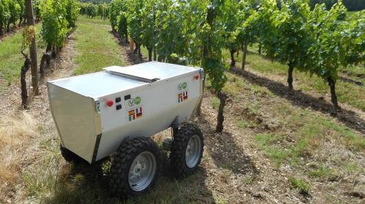 На виноградниках учет ведет VineRobot