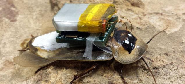 Нервная система таракана соединена с дистанционным управлением
