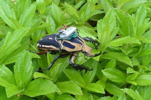 Роботизированный жук из Сингапура