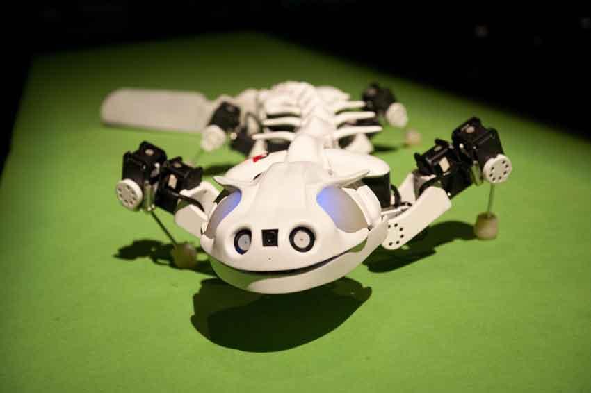 Pleurobot – правдоподобный робот, напоминающий саламандру