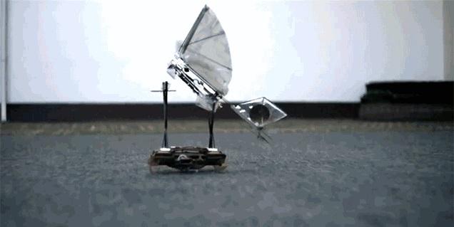 Роботизированные тараканы – идеальные крошечные транспортеры для роботов-птиц