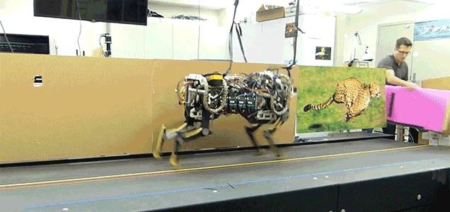 Разработка Массачусетского технологического института робот-гепард теперь прыгает во время бега, так что стены не защитят