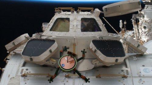 Адгезивное покрытие на основе строения конечностей геккона позволит астронавтам и роботам свободно действовать в космосе