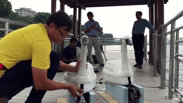Роботы-лебеди NuSwan из Сингапура для мониторинга озер